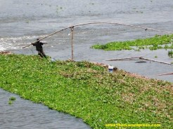 nelayan bengawan