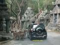 rusa mendekat mobil