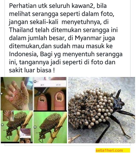 Hoax... serangga dari thailand yang menyebabkan tangan bolong-bolong