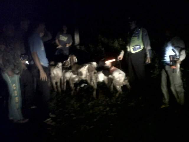 kambing hilang punya warga desa Nguluhan telah ditemukan oleh polsek Montong Tuban tanggal 28 April 2016