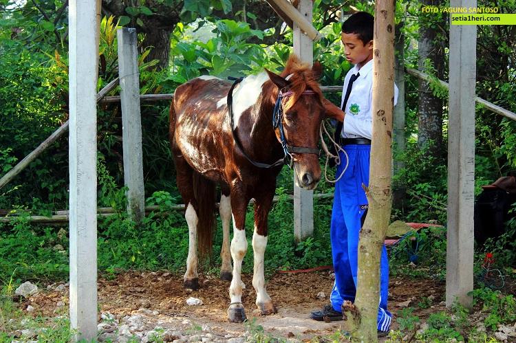 ulil albab pelajar SMPIT Ibnu Sina wuluhan jember pergi ke sekolah naik kuda (2)