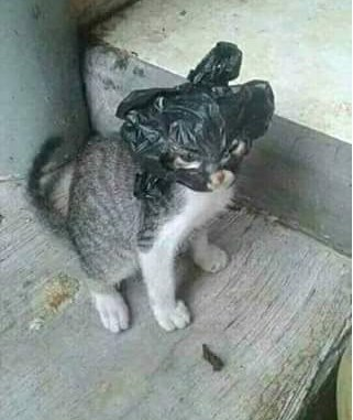 Saat nyetir ada kucing melintas dijalan, tabrak atau menghindar