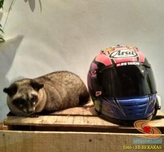 kumpulan foto biker dan hewan peliharaan brosis (10)