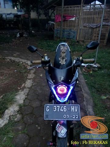 kumpulan foto biker dan hewan peliharaan brosis (6)