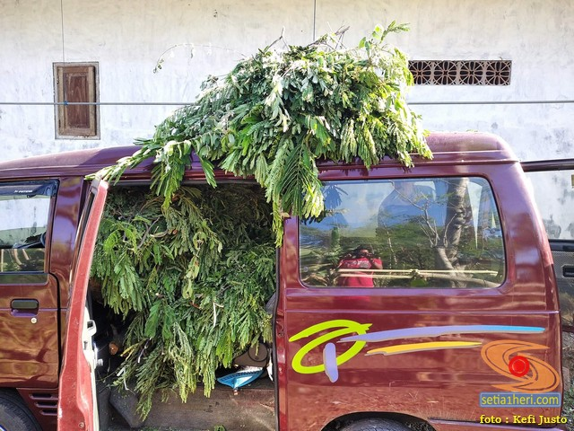Wow...Mobil Nissan Livina asal Tuban ini buat ngangkut rumput, kayu dan kambing. (2)