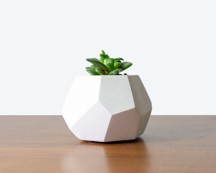 This Christmas, Give the Gift of House Plants
