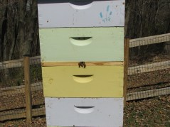 View of bees entering sedcond entrance called Imrie Shim