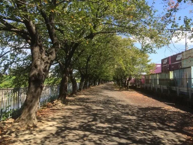 新幹線公園桜のトンネル