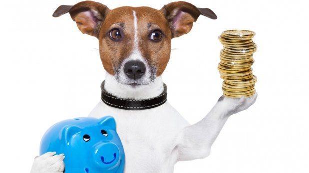 Hasta 14% del salario mensual se va en tu perro