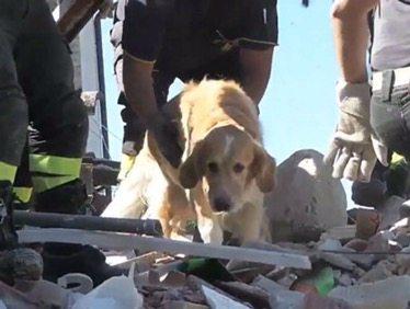 Rescatan a perro nueve días después del sismo en Italia