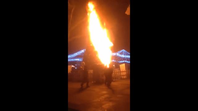 Por pirotecnia, se incendia árbol en Morelia (video)
