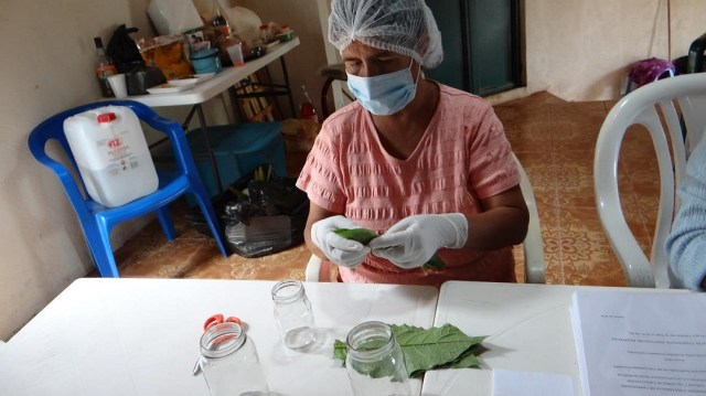 Crean apoyo para proyectos forestales encabezados por mujeres