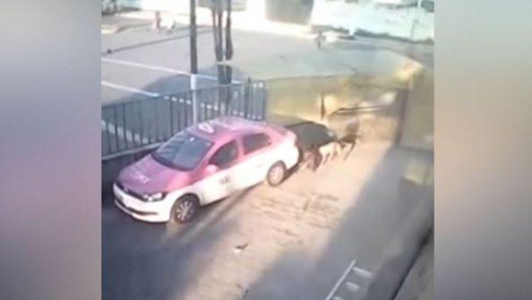 Denuncian a un hombre que viola perros callejeros en Edomex