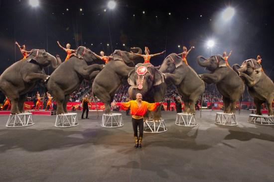 El  Circo Ringling Brothers baja el telón tras 146 años