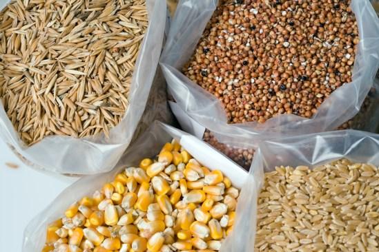 Asegura Estado de México cultivos de máiz, trigo y cebada por quinto año consecutivo