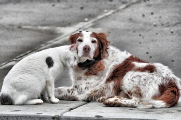 Invita Toluca a esterilizar y vacunar a perros y gatos