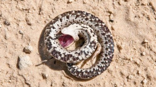 Mueren 33 reptiles en zoológico de EU, desconocen causas