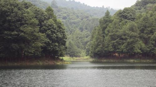 Incorporan 19 mil hectáreas del Edomex al programa pago por servicios ambientales