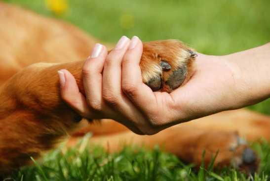 Animales de compañía deben contar con condiciones mínimas e indispensables para vivir