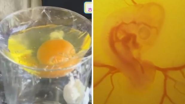 Incuban un huevo sin cascará y mira que ocurrio