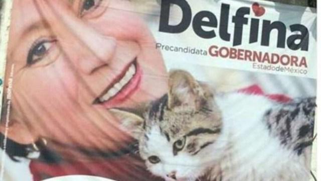Foto de Delfina Gómez con un gato genera memes en internet
