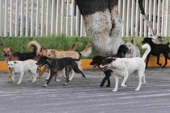 Jauría de perros ataca a dos hombres en en Toluca