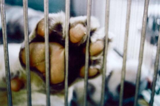 Negocio millonario el tráfico animal en México