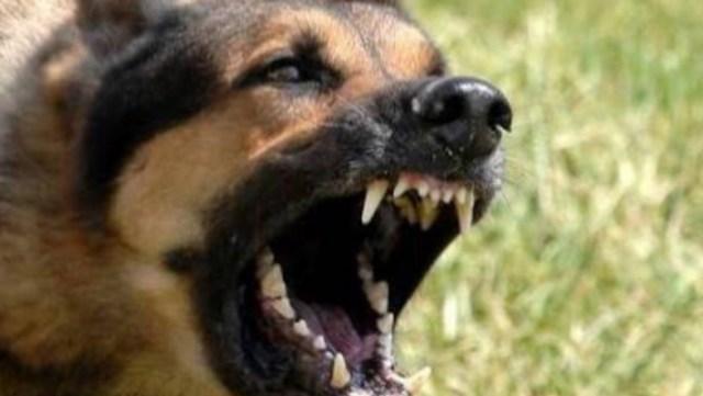 """Vecinos organizan """"cacería"""" de perros asesinos"""