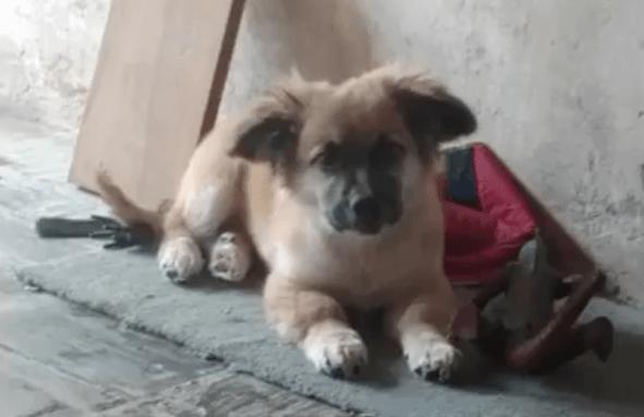 Un perro callejero rescató a un niño recién nacido y abandonado