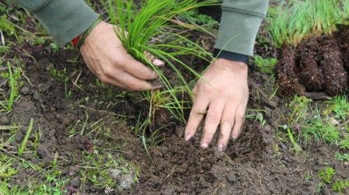 Alcanzará edoméx cifra histórica de árboles reforestados con 147 millones