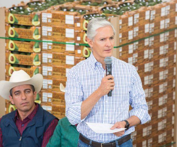 Gobierno del Edoméx respalda a productores mexiquenses de aguacate