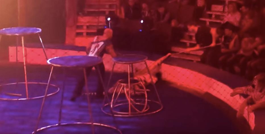 Convulsiona tigre en plena función de circo
