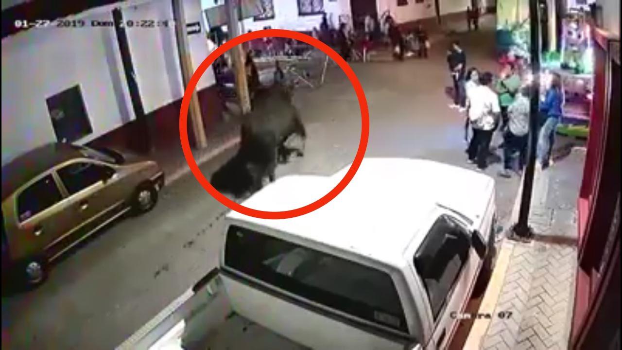 VIDEO: Escapa toro y provoca pánico en Tonatico