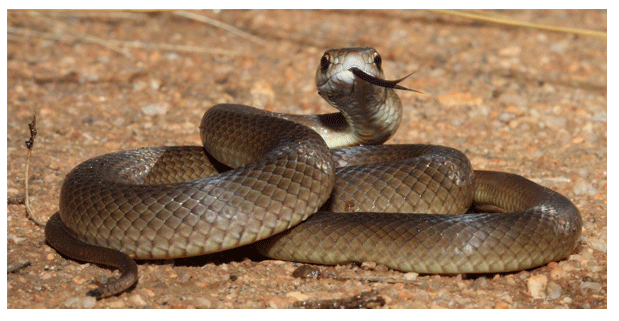 """Zoológico lanza convocatoria para bautizar a serpiente con el nombre de tu """"ex"""""""