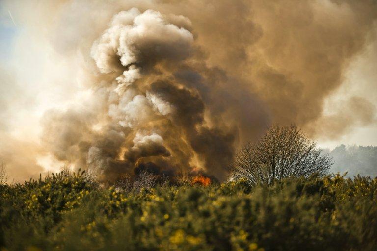 """Llamas consumen el """"Bosque de los Cien Acres"""" en Reino Unido"""