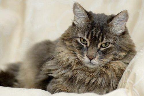 Mujer gasta una fortuna en cirugías plásticas... ¡para su gato!