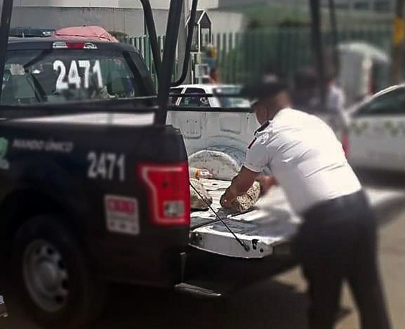 Retiran obstáculos de la vía pública de Toluca