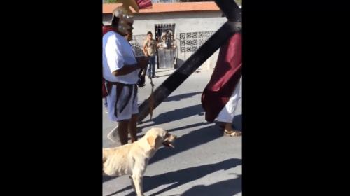 Perrito callejero defiende a Jesús de los soldados romanos (Video). Noticias en tiempo real