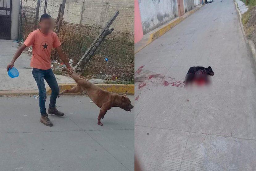 Con un Pitbull, sujeto violenta a otros perros en Zinacantepec