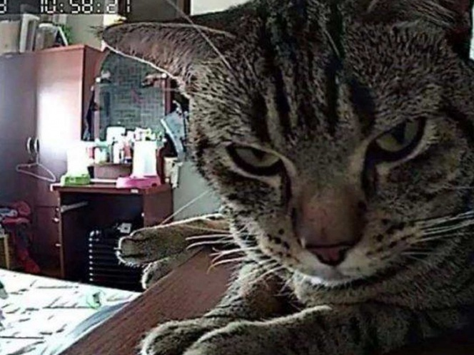 Se lleva la sorpresa de la vida al descubrir que su gato lo asfixiaba por las noches