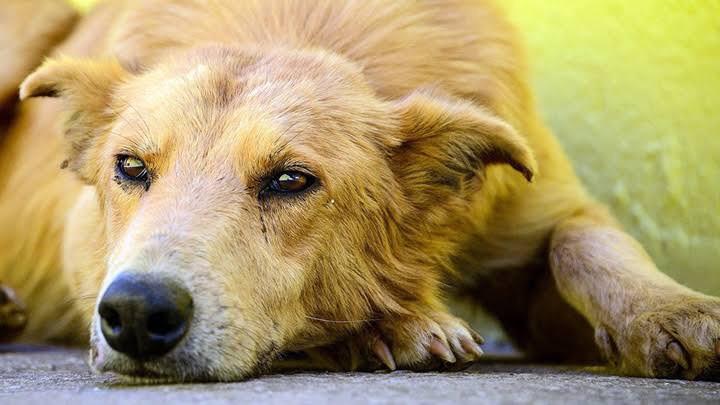 Sigue ayuntamiento de Zinacantepec en busca de los responsables por envenenamiento de perros