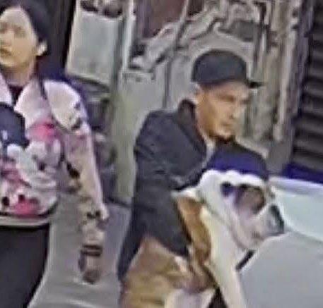 """Rescatan a """"Emilio"""" el bulldog robado en la Roma y agarran a dos"""