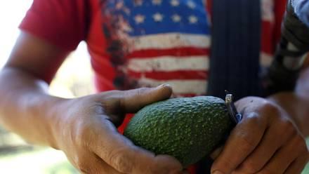 'Pueblos Unidos' el nuevo frente armado contra la delicuencia en Michoacan, son productores de aguacate y zarzamora