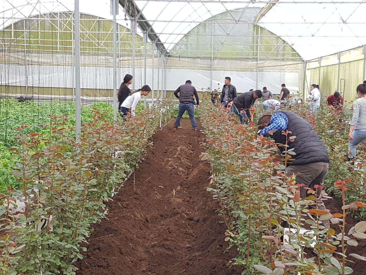 Floricultores mexiquenses deben producir con calidad para ser competitivos en el mercado