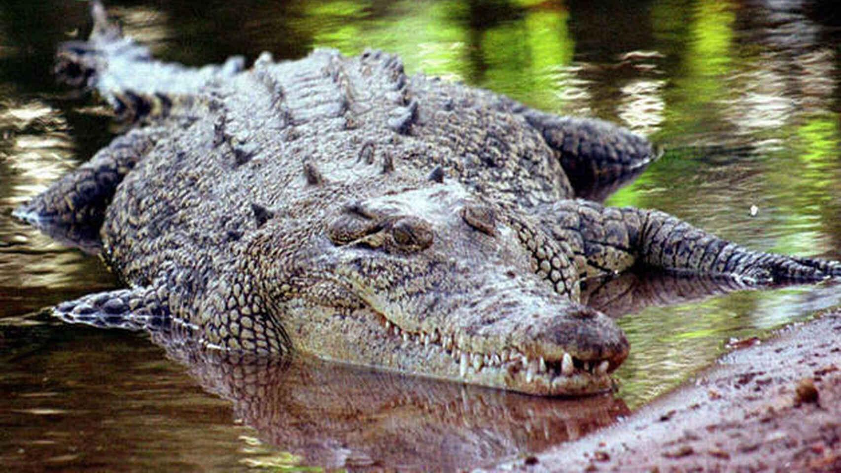 Salva hombre a su amigo de las fauces de un cocodrilo