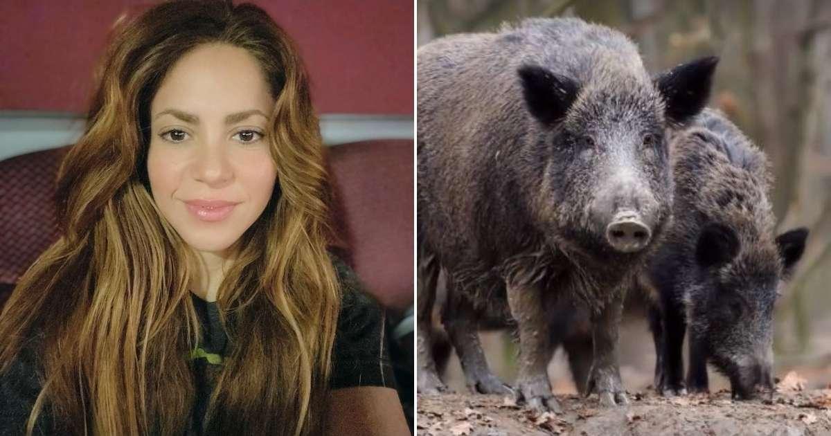 #VIDEO Shakira cuenta a sus seguidores que fue atacada por dos jabalíes