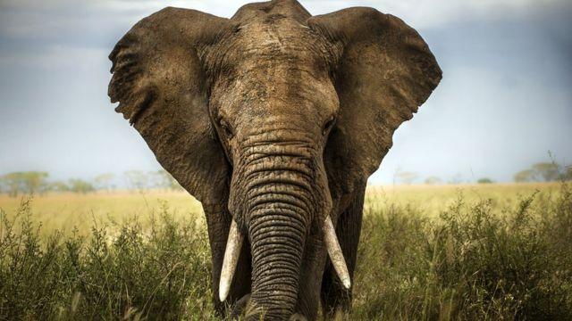 Así fue el conmovedor rescate de una cría de elefante atrapada en una trampa