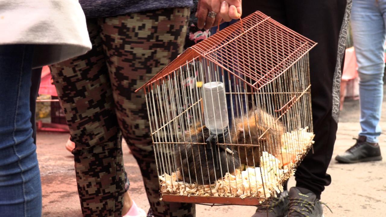 <em>Gobierno de Ecatepec realiza operativos en tianguis para evitar venta de animales domésticos y silvestres</em>