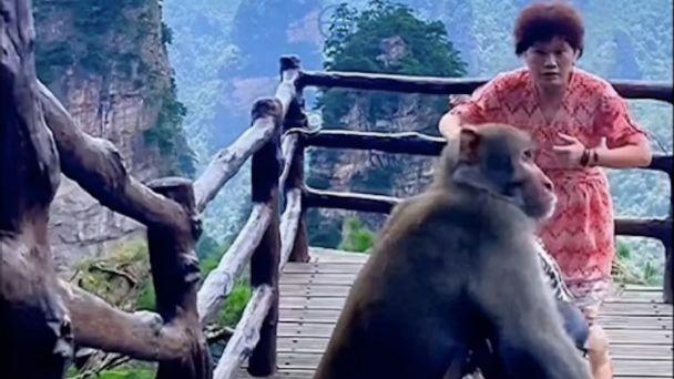 En China, mono roba el bolso de una mujer mientras bailaba