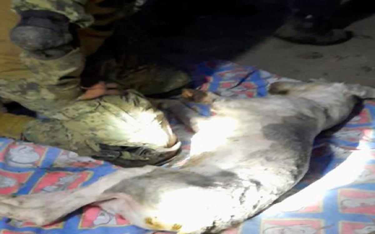 """#Video del rescate de un """"Lomito"""" en el Cerro del Chiquihuite, se hace viral"""